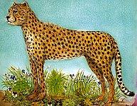 Gattopard